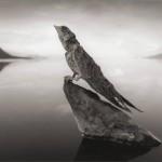 Lago Natron convierte a los animales en piedra