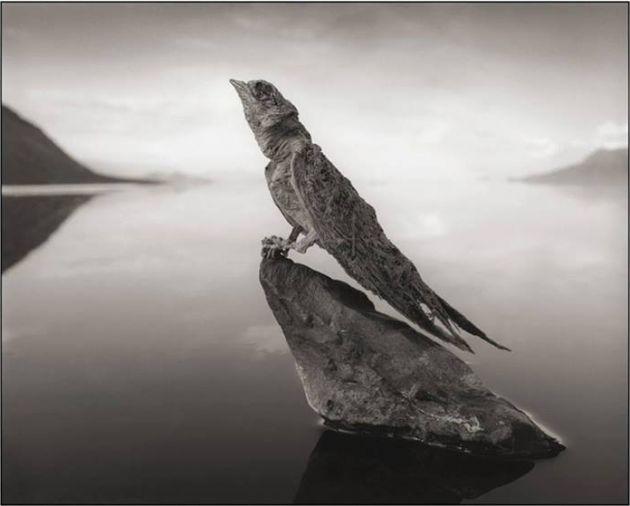 [Imagen: El-lago-que-convierte-a-los-animales-en-...ado-01.jpg]