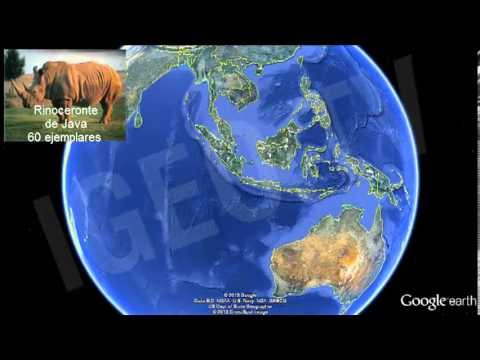 Especies en peligro de extinción 2013