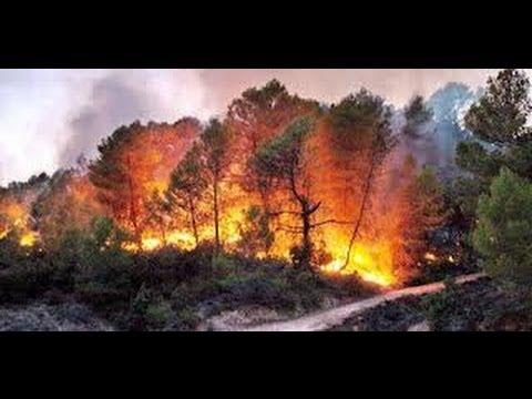 Incendio en el Parque Natural del Alto Tajo
