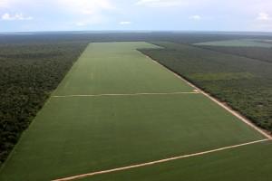 Cultivos de soja transgénica en el Amazonas
