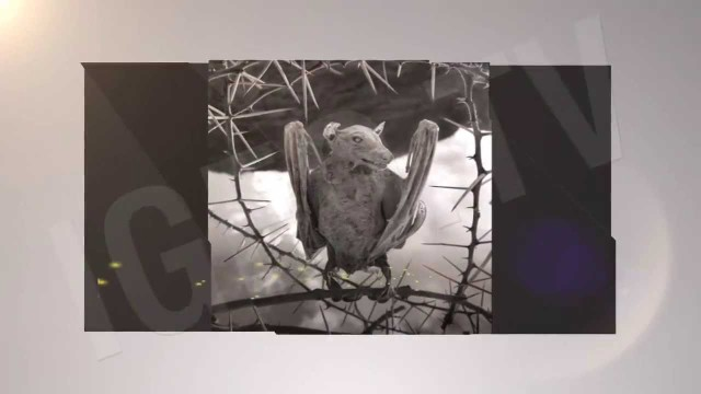 Lago Natron: Animales Petrificados