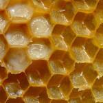 En directo, ¿qué ocurre dentro de una colmena de abejas?