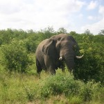 Kruger National Park (South Africa)