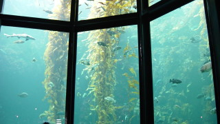 En directo – Open Sea, Monterey Bay Aquarium